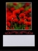 Wine Bottle Labels, Poppies - Pack of 32