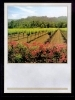 Wine Bottle Labels, Vineyard - Pack of 32